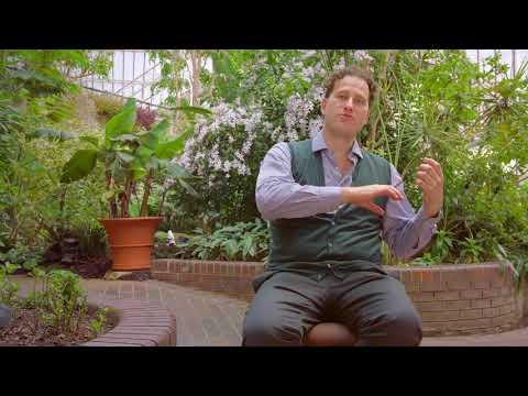 Video Nikolaj Znaider - Mozart Violin Concertos Nos 4 & 5